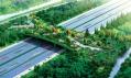 Přechod mezi dvěma lesoparky po speciálním zalesněném mostě nad dálnicí