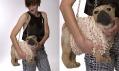 Kabelka psa na studiové fotografii od Mares Lucie a Silondi Marie
