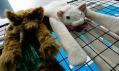 Šály v podobě hnědého chlupatého psa a bílé kočky