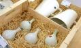Whitefruits na Designblok 08: Cibulka a Minimax