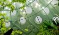 Deštný prales ve skleněné kouli v pohledu zevnitř