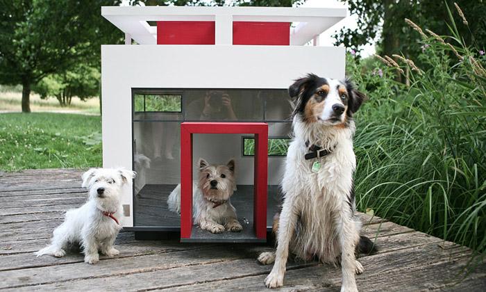 Psí boudy odBest Friend'sHome jsou honosné domy