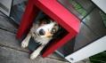 Best Friend's Home - Cubix