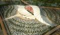 Stadion pro Katar 2022: Al Khor