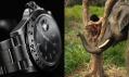 Ukázky snímků z fotoaparátu Hasselblad H4D-200MS v malém rozlišení