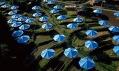 Předešlé slavné výtvarné projekty dvojice Christo a Jeanne-Claude