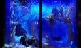 Vánoční výloha obchodního domu Harrods v Londýně