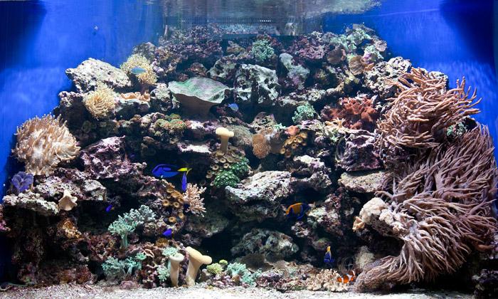 Hitem interiérů jsou mořská ajaponská akvária