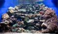 Ukázka mořeského akvária odRevolutionary Aquarium System