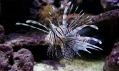 Ukázka mořského akvária od Revolutionary Aquarium System