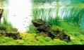 Ukázka japonského akvária od Revolutionary Aquarium System