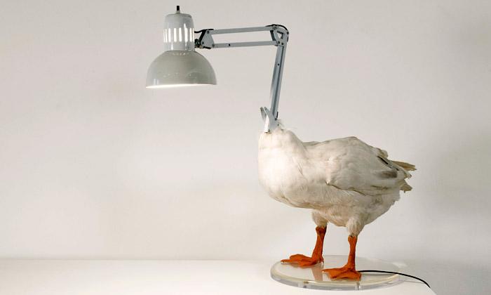 Sebastian E navrhuje šokující díla jako kachní lampu