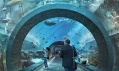 Vítězný projekt na basilejské oceanárium od Boltshauser Architekten