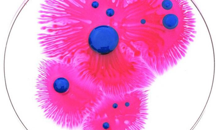 Klari Reis tvoří abstraktní obrazce vPetriho miskách