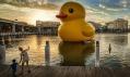 Florentijn Hofman a jeho obří gumová kachna plující světěm