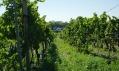 Nově zrekonstruovaný Vinný sklep U Modráka v obci Vrbovec