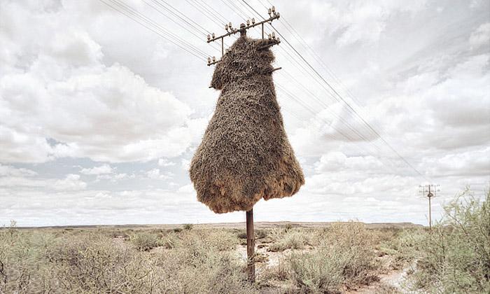 Dillon Marsh fotografuje nevšední objekty vkrajině