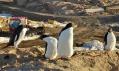 Postup výstavby stanice Bharati na Antarktidě