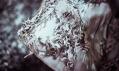 Iris van Herpen a její kolekce Wilderness Embodied