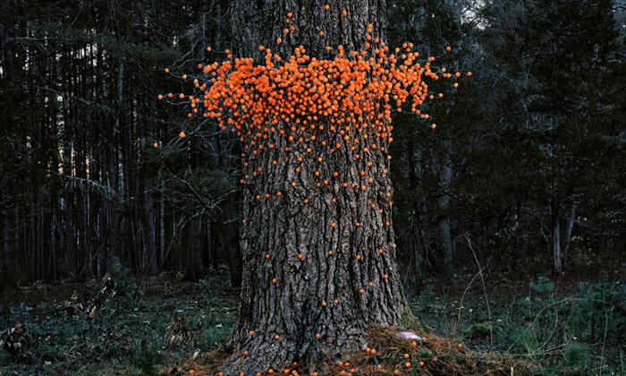 Thomas Jackson nafotografuje umělé roje vpřírodě