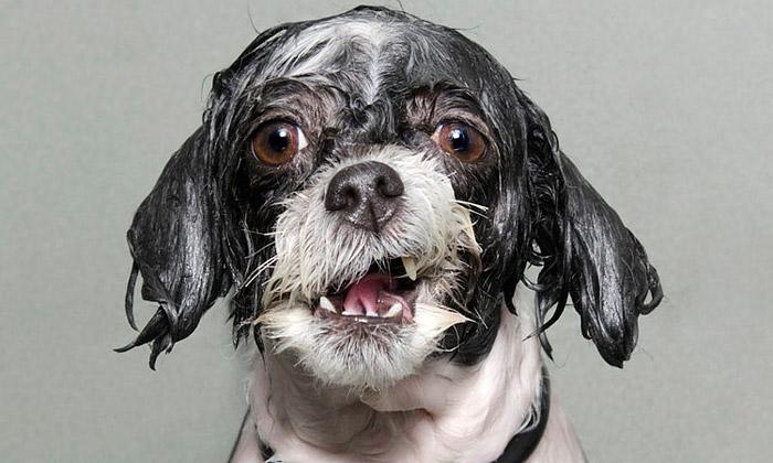Sophie Gamand fotografuje pocity aemoce psů