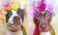 Sophie Gamand a její kolekce fotografií Flower Power