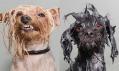 Sophie Gamand a její kolekce fotografií Wet Dog