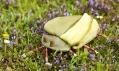 Zlatka Lamrová a ukázka jejich broží brouků