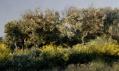 Pleasant Places a Davide Quayola