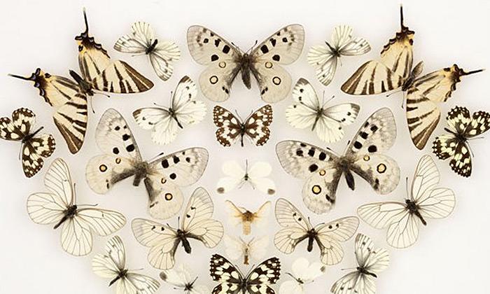 Marie Jirásková vytváří koláže zdesítek motýlů