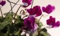 Sexuální pomůcky pro rostliny od PSX Consultancy