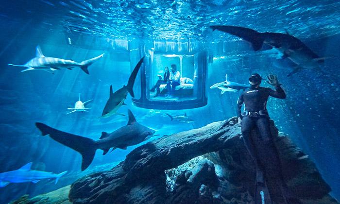 Žraločí akvárium vPaříži nabízí ubytování pod vodou