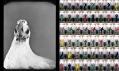 Ukázka z výstavy Bílá místa slovenské fotografie