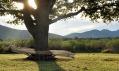 Sezení kolem stromu: Markéta Nováková