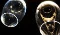 Pexxa a kolekce křišťálových svítidel Svit