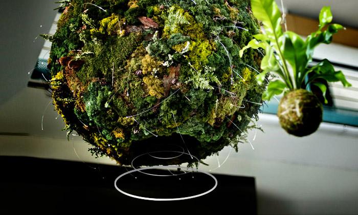 Hlas lesa přinese doTančícího domu kousek přírody