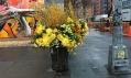 Lewis Miller a jeho výzdoba odpadkových košů v New Yorku