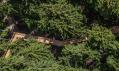 Stezka korunami stromů Krkonoše
