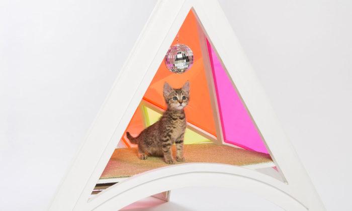 Architekti navrhli pro charitu extravagantní přístřešky pro kočky