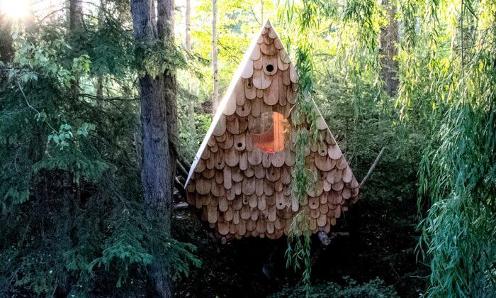 Chatka vkanadských lesích nabízí postel pro dva abudky pro 12 ptáků