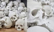 Ron Mueck a jeho instalace 100 lebek s názvem Mass
