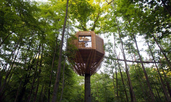 Hotelový pokoj nastromě Origin Tree House připomíná ptačí budku