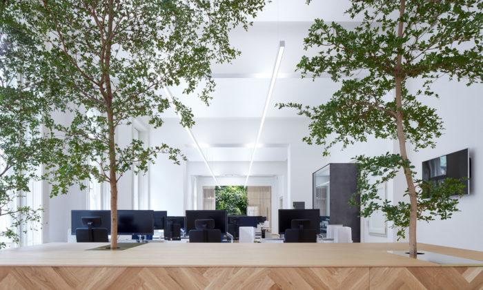 Kanceláře české pobočky AON zdobí vzrostlé živé stromy asvítící květy