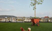Louka nad Lucernou