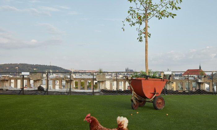 Na střeše pražské Lucerny vznikla louka sezvířaty ahudbou