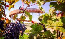 Stezka nad vinohrady v Kobylí