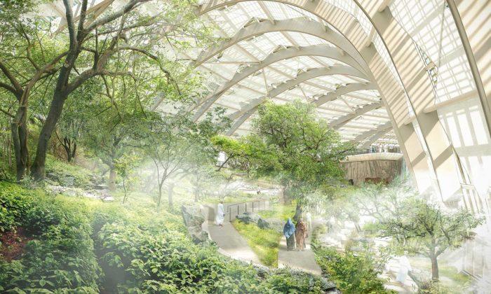 Grimshaw navrhli pro Omán obří botanickou zahradu sohroženými druhy rostlin