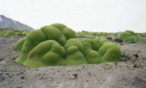 Ukázka zvýstavy Broken Nature naXXII Triennale di Milano
