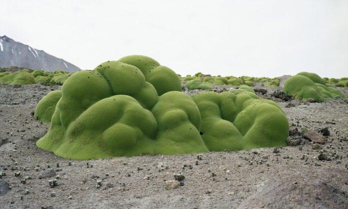 Broken Nature jevelká výstava 100 projektů designu pro záchranu lidstva