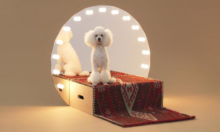 Belgie uspořádala děsivou výstavu ozvířatech chovaných pro lidské potěšení